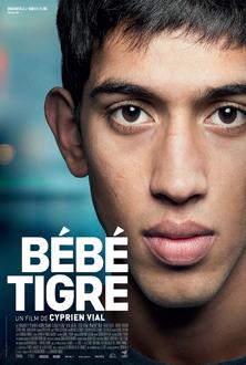 Bebe Tigre